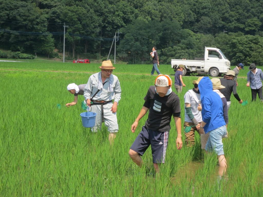 林鷹央講師と共に田んぼの生きものの採取を開始