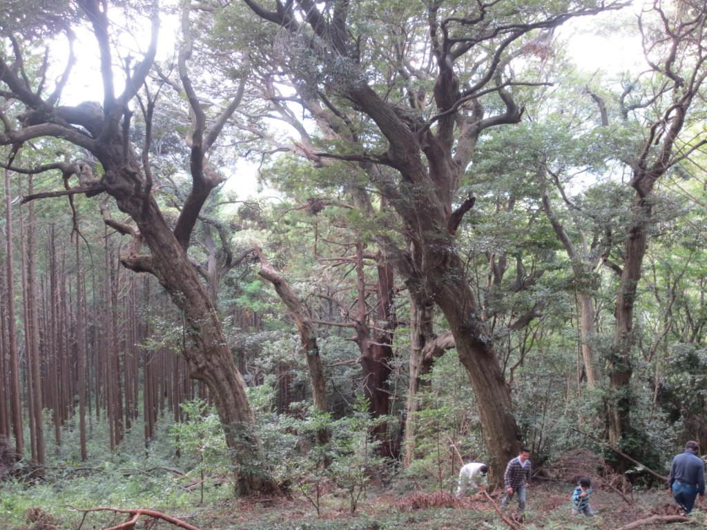 まるで映画の1シーンのような巨木が